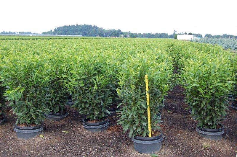 #10 P Skips new crop 5-21-13