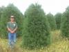 Pine-8-9