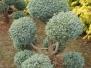 West Coast Topiary